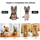 USB Cordless Electric Dog Clipper Set