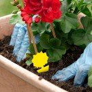 10PCS Sticky Fruit Fly Trap Bug Killers for Plant